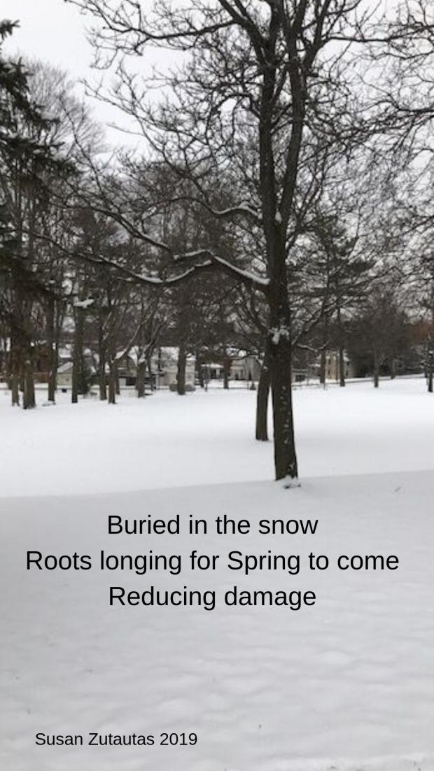 root haiku