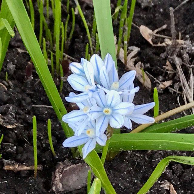 blue flowers july 2