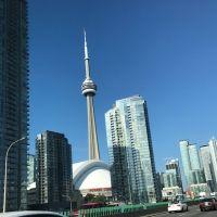 Toronto Blues