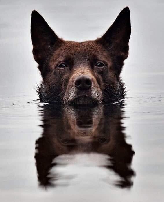 dog reflections