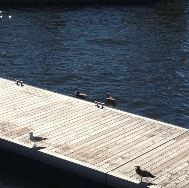 boardwalk lines