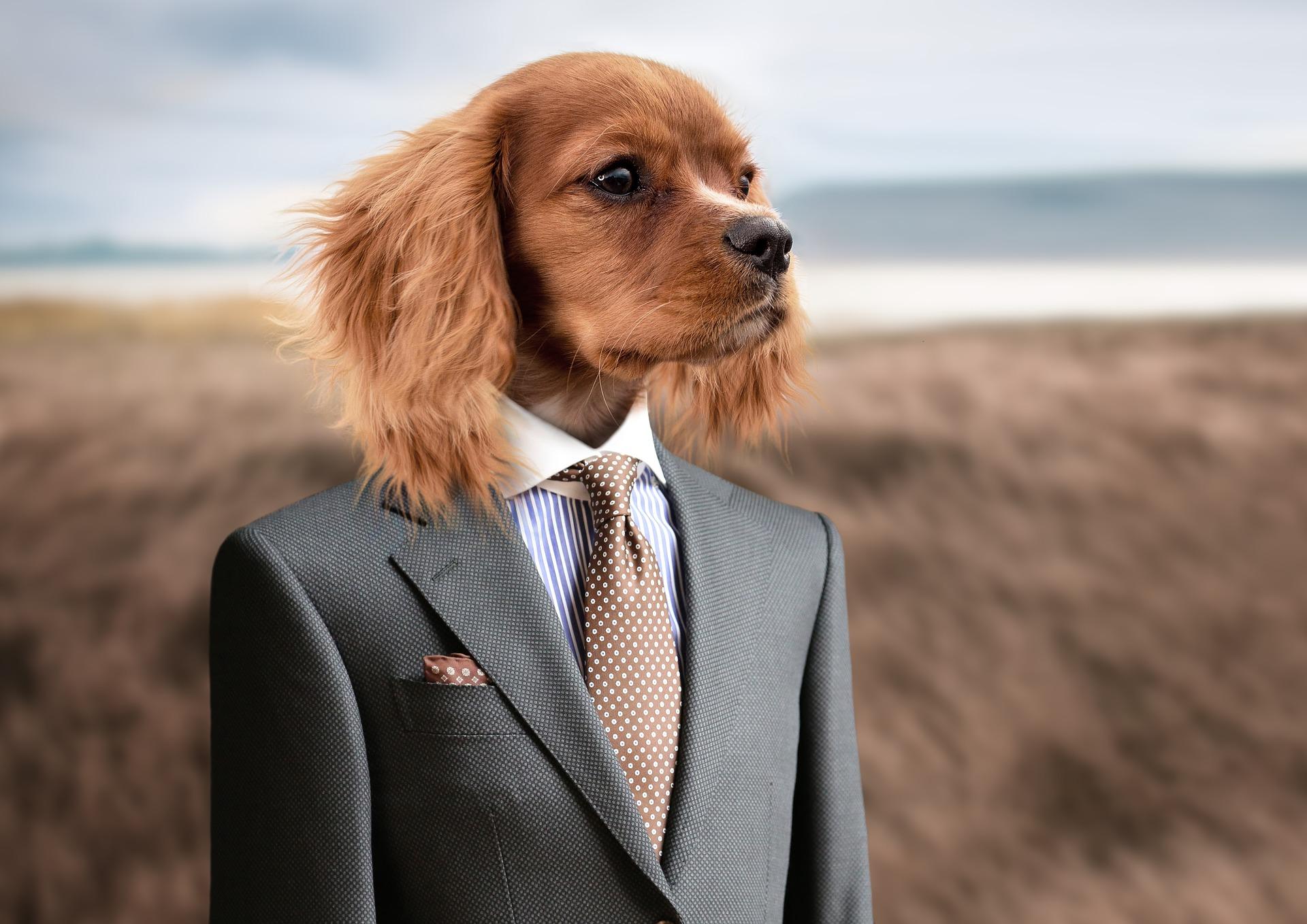 dog-2467149_1920