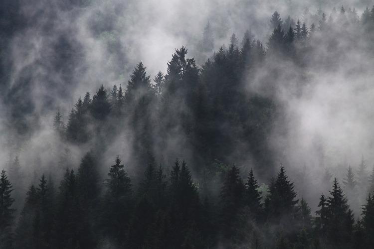 fir-trees-1835402_1920