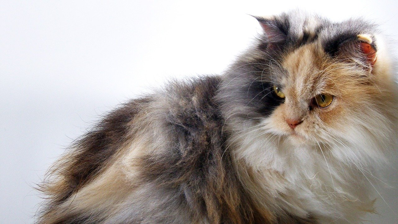 cat-1020925_1280