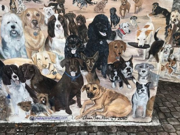 dogs on wall
