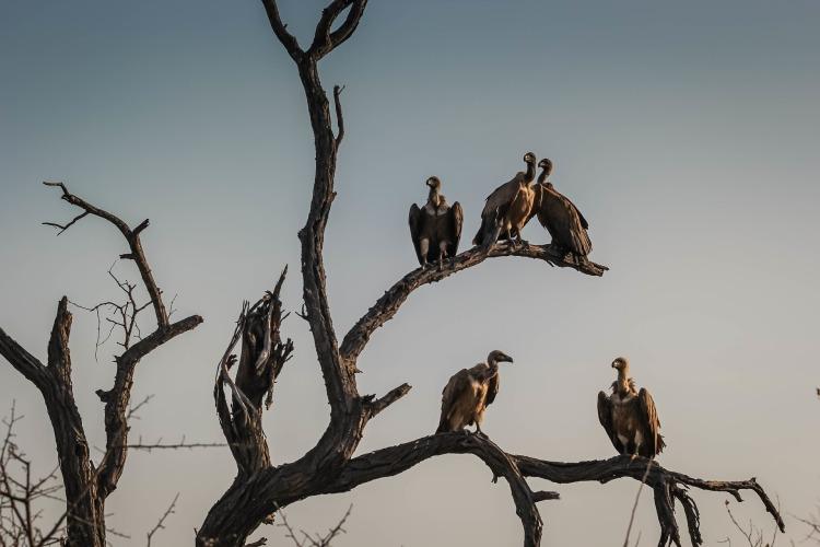 vultures-1081751_1920