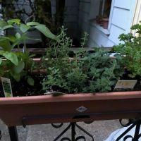 Herb Garden - Tanka